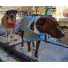 Dog coat Jacket